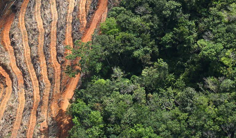 Worldwide deforestation rising despite bold commitments report finds