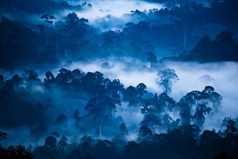 Rainforests in Borneo. Image by Liana Joseph/WCS.