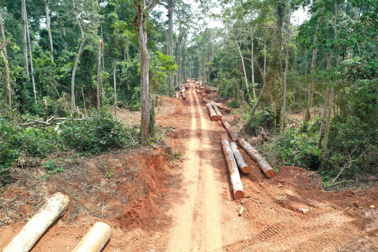 A logging road cuts through a forest in Central Africa. Image courtesy of WCS.