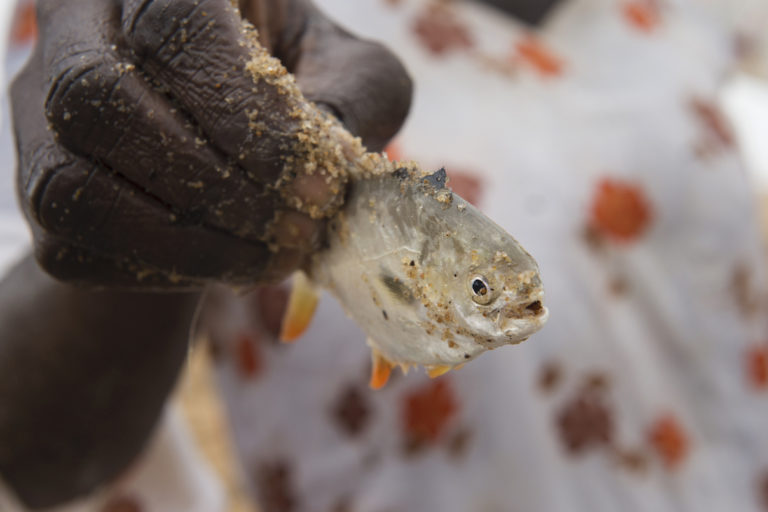 Scientists emphasize disease control in booming aquaculture sector