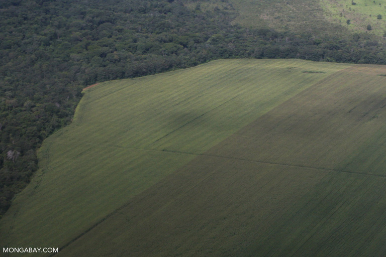 A soy field abuts the forest in the Brazilian Amazon. Image by Rhett A. Butler/Mongabay.