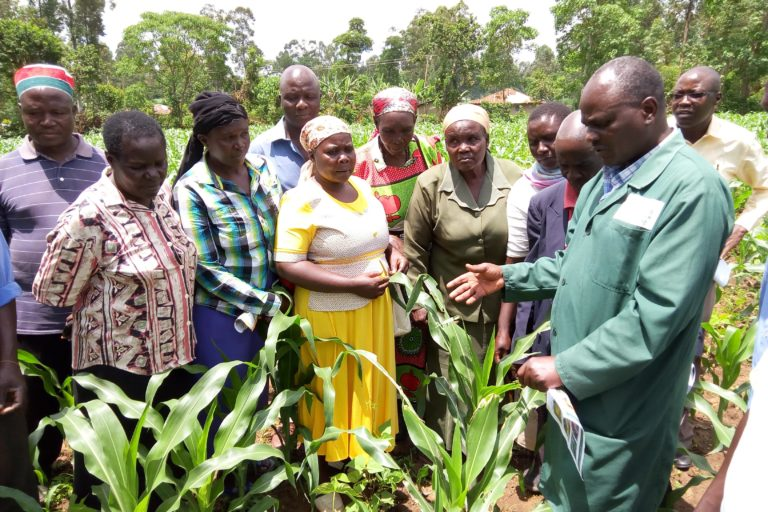 Field inspection for fall armyworm in Kakamega County, Kenya.