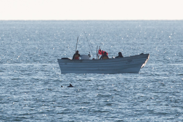 A vaquita swims near a fishing boat using gillnets. Image courtesy of CONANP/Museo de la Ballena/SEA SHEPHERD.