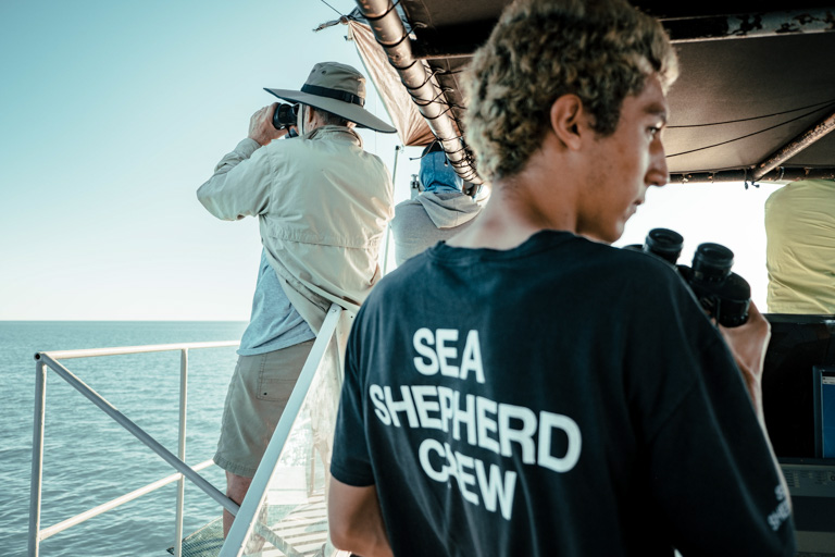 The expedition's crew surveys the Gulf of California for vaquita. Image courtesy of CONANP/Museo de la Ballena/SEA SHEPHERD.