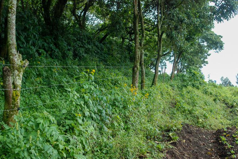 The boundary of Virunga National Park in DRC. Image by John C. Cannon/Mongabay.