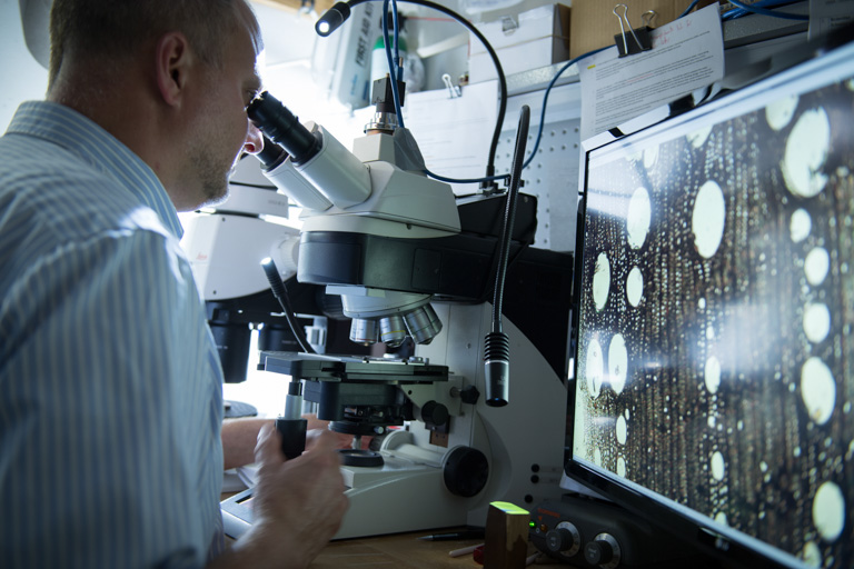 Wiedenhoeft uses a microscope to examine a wood sample. Image © James Schnepf/WWF-US.