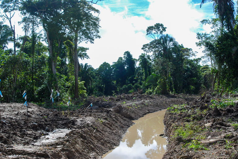 Intact ecosystems provide communities with fresh water, but forest clearance for oil palm (pictured here) can disrupt the provisioning of that resource. Image by John C. Cannon/Mongabay.
