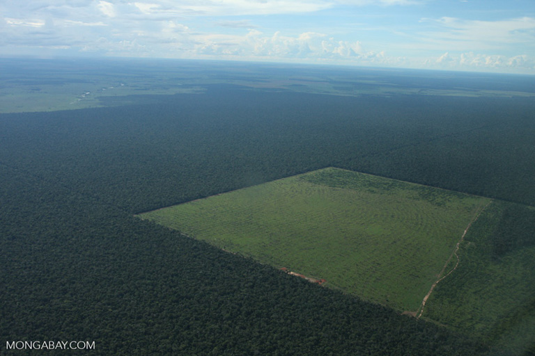A soy plantation in the Amazon. Image by Rhett A. Butler/Mongabay.