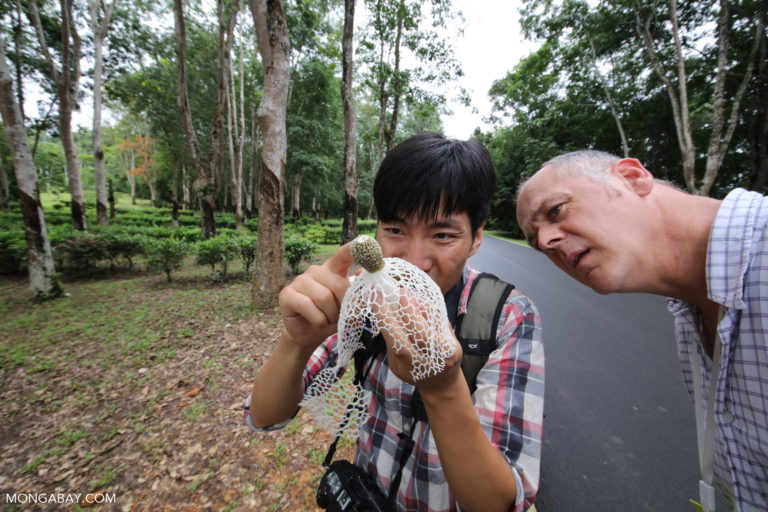 Researchers examining fungi in China. Photo by Rhett A. Butler.