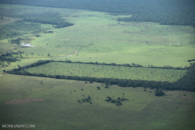 Newly deforested land in the Amazon. Image by Rhett A. Butler/Mongabay.