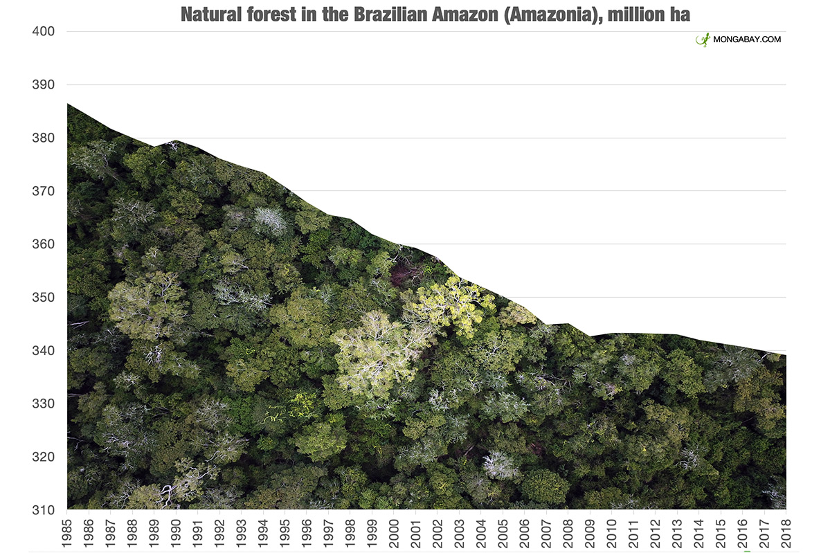 Natural forest covering in the Brazilian Amazon according to data aggregated by MapBiomas.