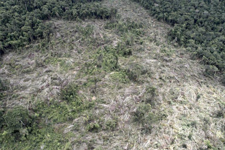 Illegal logging persists in Cambodia's Prey Lang Wildlife Sanctuary: Report