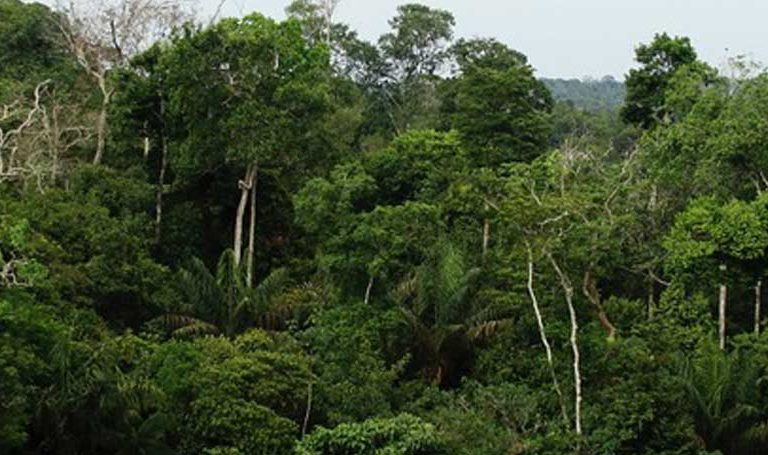 Amazon trees may absorb far less carbon than previously thought: study