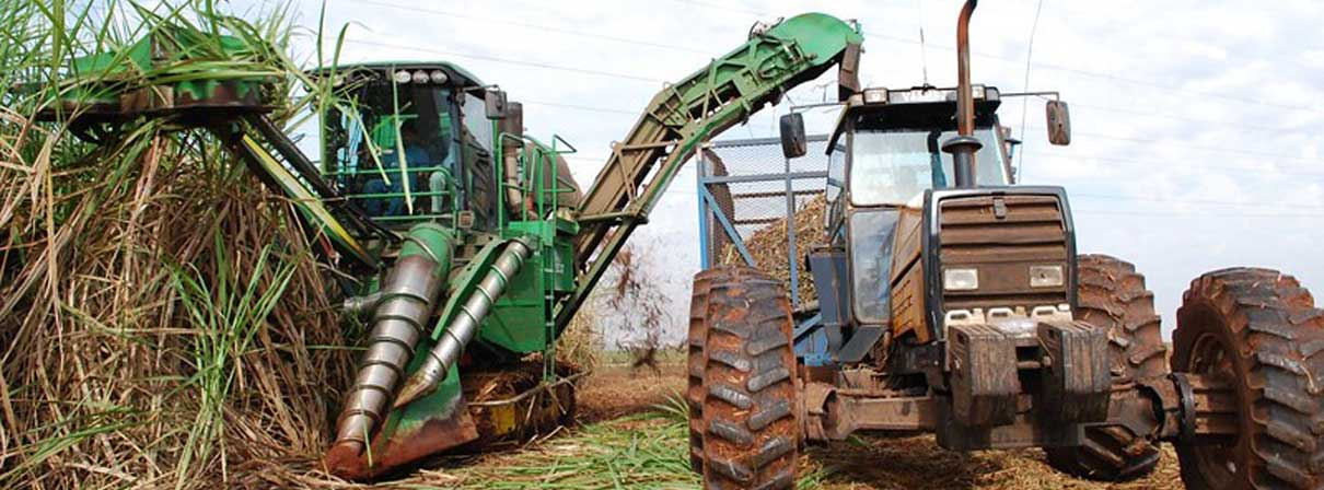 Brazil sugarcane growth can meet biofuel need and not drive