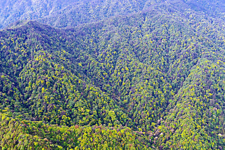 View overlooking the forest in Gutianshan National Nature Reserve. Photo courtesy of Lei Chen.