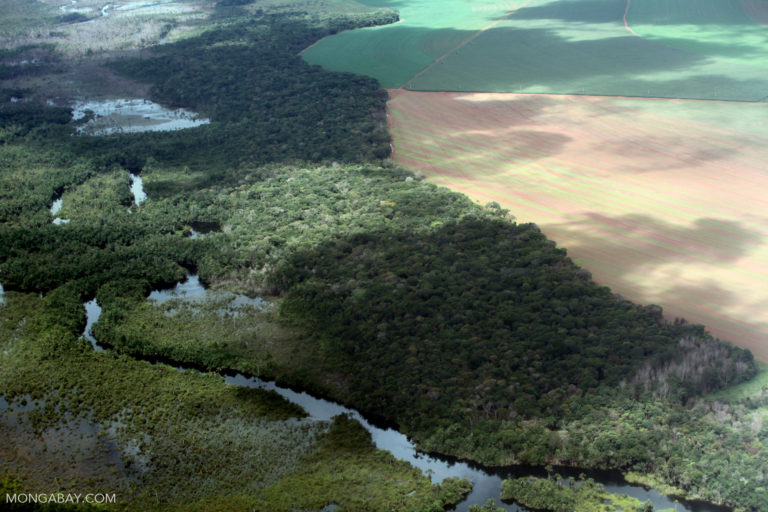 Deforestation for soy plantations and cattle ranches endanger the habitats of Amazon primates and prevent their movement to new locations. Rivers further limit the ability of small primates to move. Photo by Rhett A. Butler