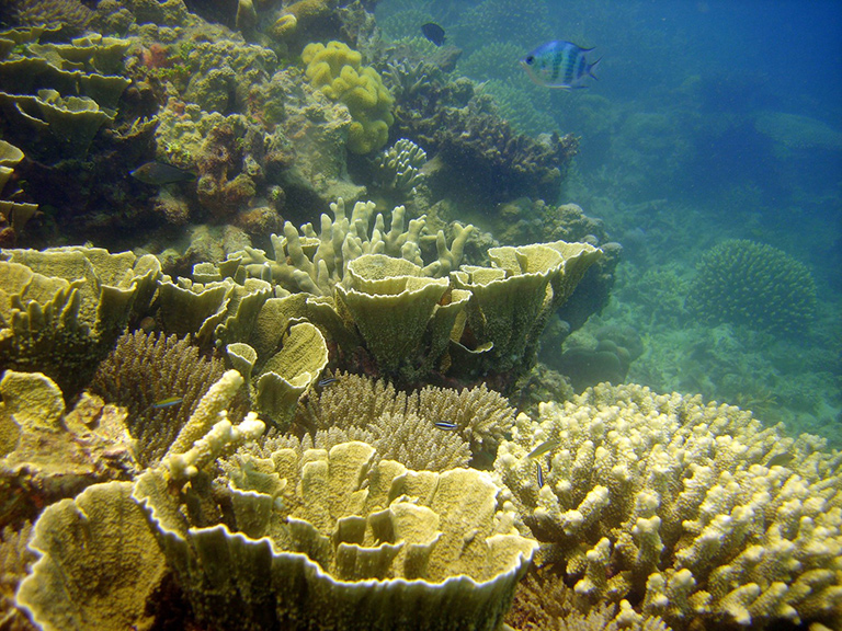 Protecting Living Corals Could Help Defend The Great Barrier
