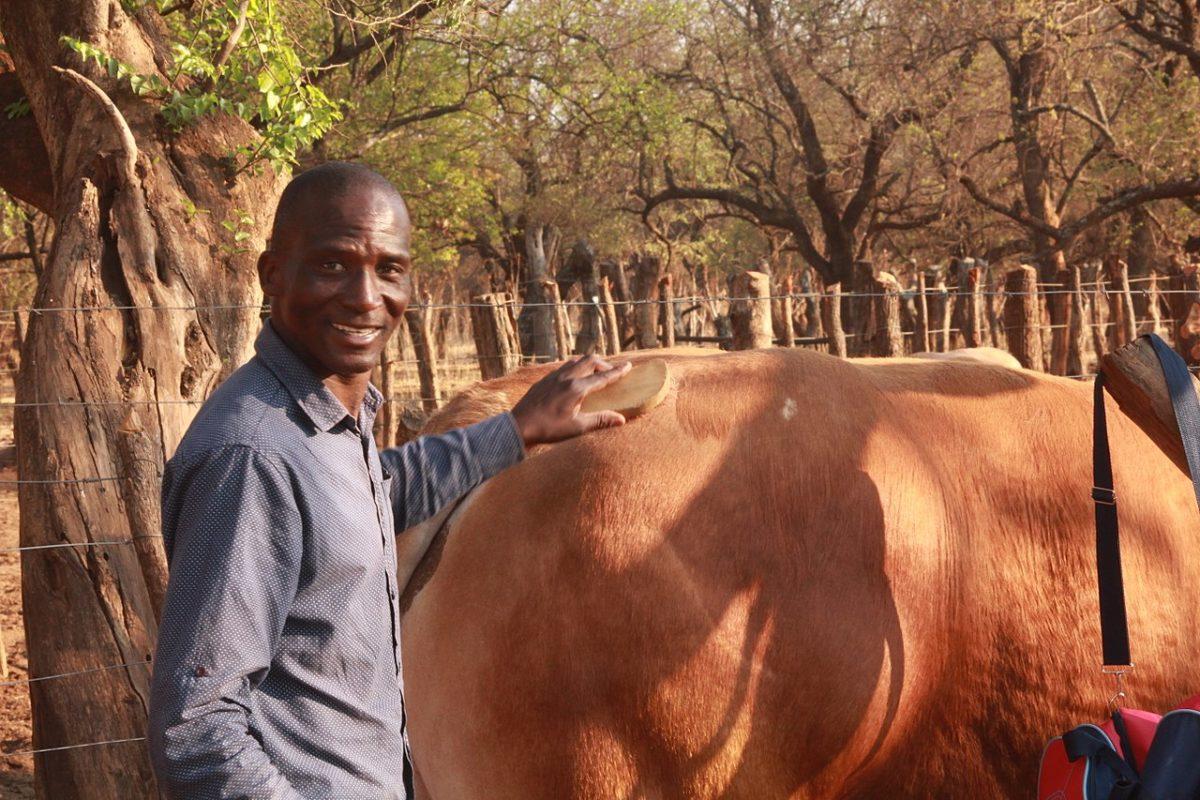 A farmer with his bull at Kalakamati, Botswana. Image by Mompati Dikunwane via Wikicommons (CC BY-SA 4.0)