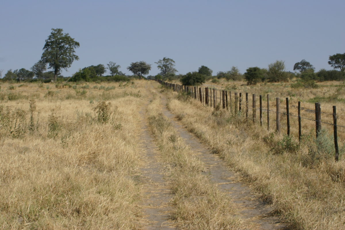 The Setata Fence was built in 1995 to prevent disease migrating from wild animals to domestic cattle. Because of its impact on migrating wildlife, it was taken down in 2004, only to be rebuilt in 2008. Image by Terry Feuerborn via Flickr (CC BY-NC 2.0)