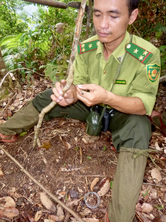 Researchers say that hundreds of snares can be collected in a single day's walk through the Annamite forest. Through snaring alone, the Annamites are facing grave defaunation and, comparatively, Borneo's forest lands that come under logging concessions are safer for similar species. Image by Andrew Tilker.
