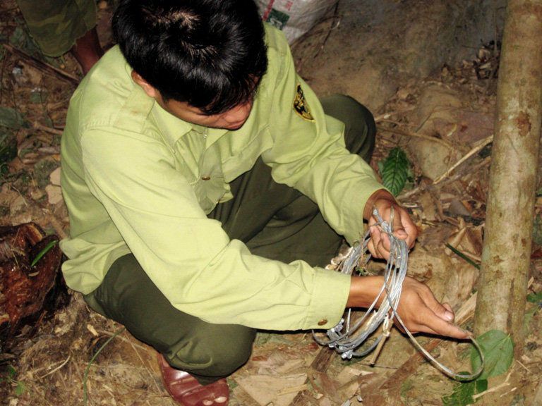 A forest ranger removes a snare in central Vietnam. Hunters are increasingly using easy-to-construct snares to hunt mammals and ground-dwelling birds in the Annamite Mountains in Vietnam and Laos. Image by Andrew Tilker.