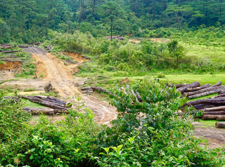Forest degradation in Deramakot, Malaysian Borneo, one of the study sites. Researchers gathered data from large areas in both the Annamites and Borneo. Image by Azlan Mohamed.