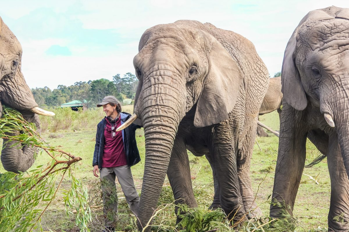 Sue Palminteri with elephants. Courtesy of George Powell.