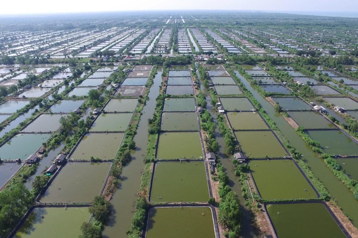 Indonesian Shrimp Farms