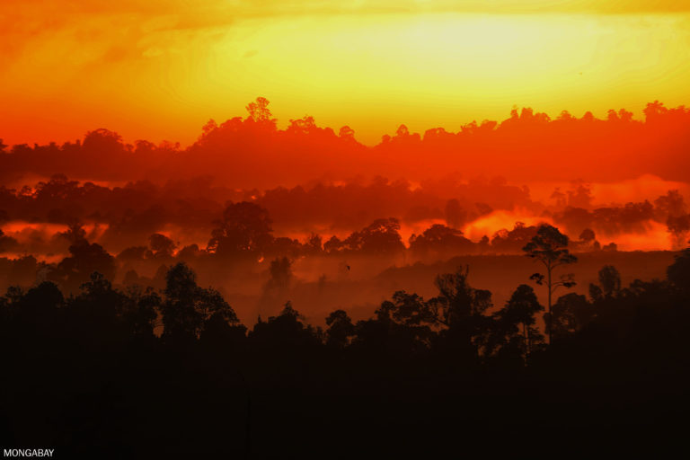 Sunrise in East Kalimantan, Indonesia in 2019. Photo by Rhett A. Butler.