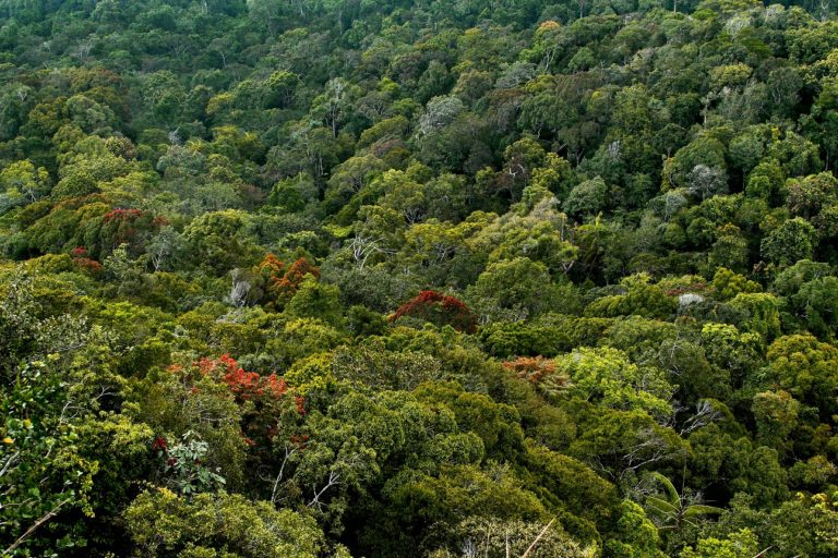 jungle, Top 10 Most Beautiful Jungles, Phenomenal Place