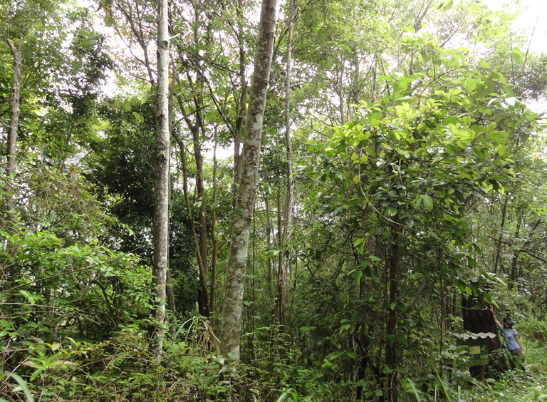 The role of sustainable finance in Forest Landscape Restoration (commentary)