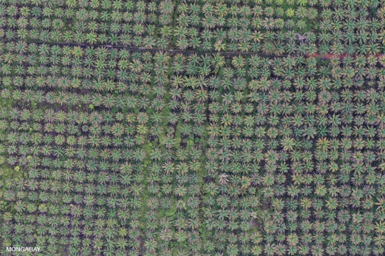 Oil palm plantation in West Kalimantan. Photo by Rhett A. Butler.