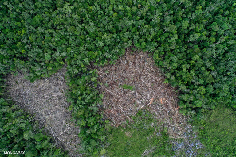 Deforestation in Borneo. Forest conservation and restoration are vital to curbing climate change, while deforestation destroys habitat and puts humanity at greater risk of new nature-derived pandemics. Photo by Rhett A. Butler
