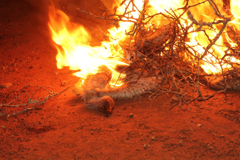 Burning a poisoned white-backed vulture carcass. Image courtesy Wildlife ACT.