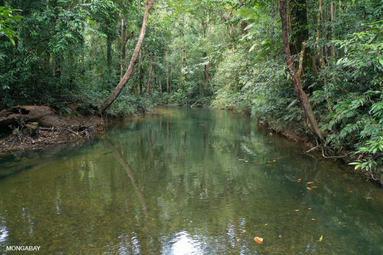 Sungai Utik river in West Kalimantan. Photo by Rhett A. Butler.