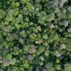 Rainforest canopy in Kapuas Hulu, West Kalimantan. Photo by Rhett A. Butler.