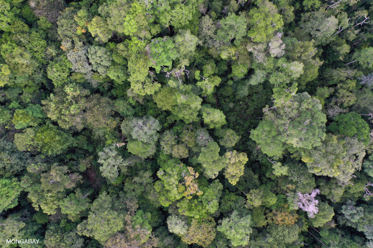 Rainforest canopy in Kapuas Hulu, West Kalimantan. Photo by Rhett A. Butler.