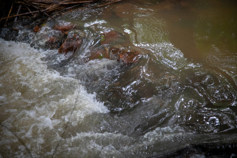 Detail of the Igarapé Água Branca stream, the last clean waterway in the city of Manaus, the capital of Amazonas state, in the Amazon region. Image by César Nogueira.