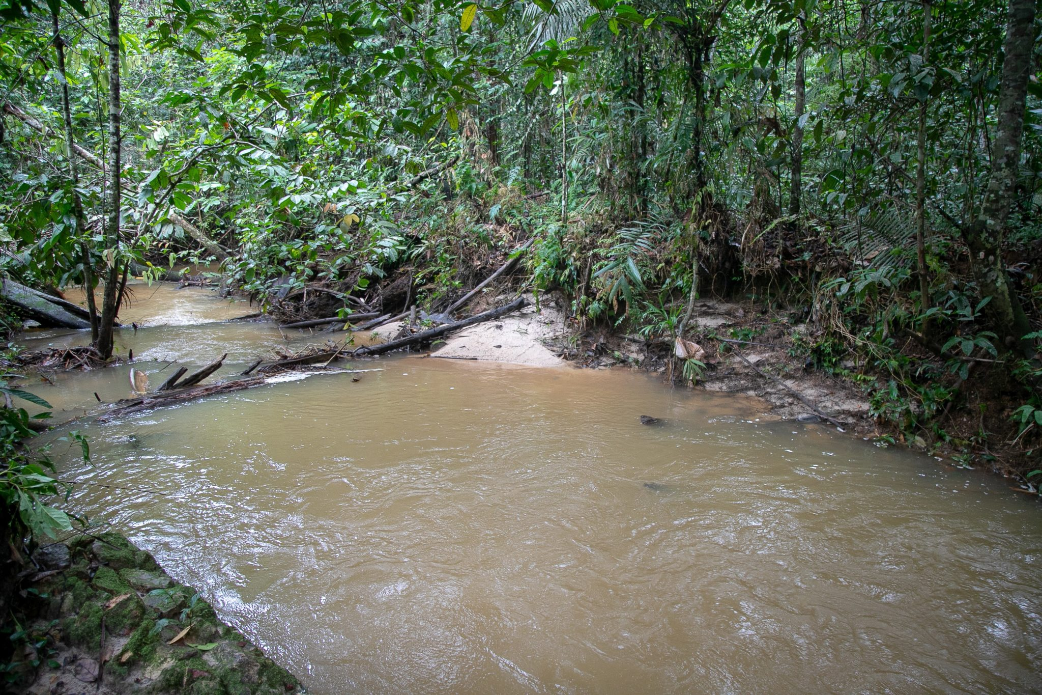 Overview of the Igarapé Água Branca, the last clean stream in the city of Manaus, the capital of Amazonas state, in the Amazon region. Image by César Nogueira.