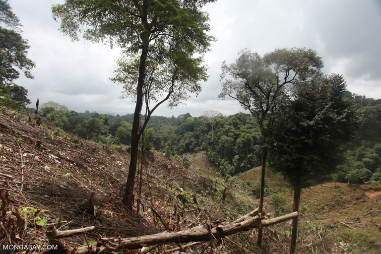 Illegal forest clearing in an indigenous reserve in Colombia. Image by Rhett A. Butler/Mongabay.