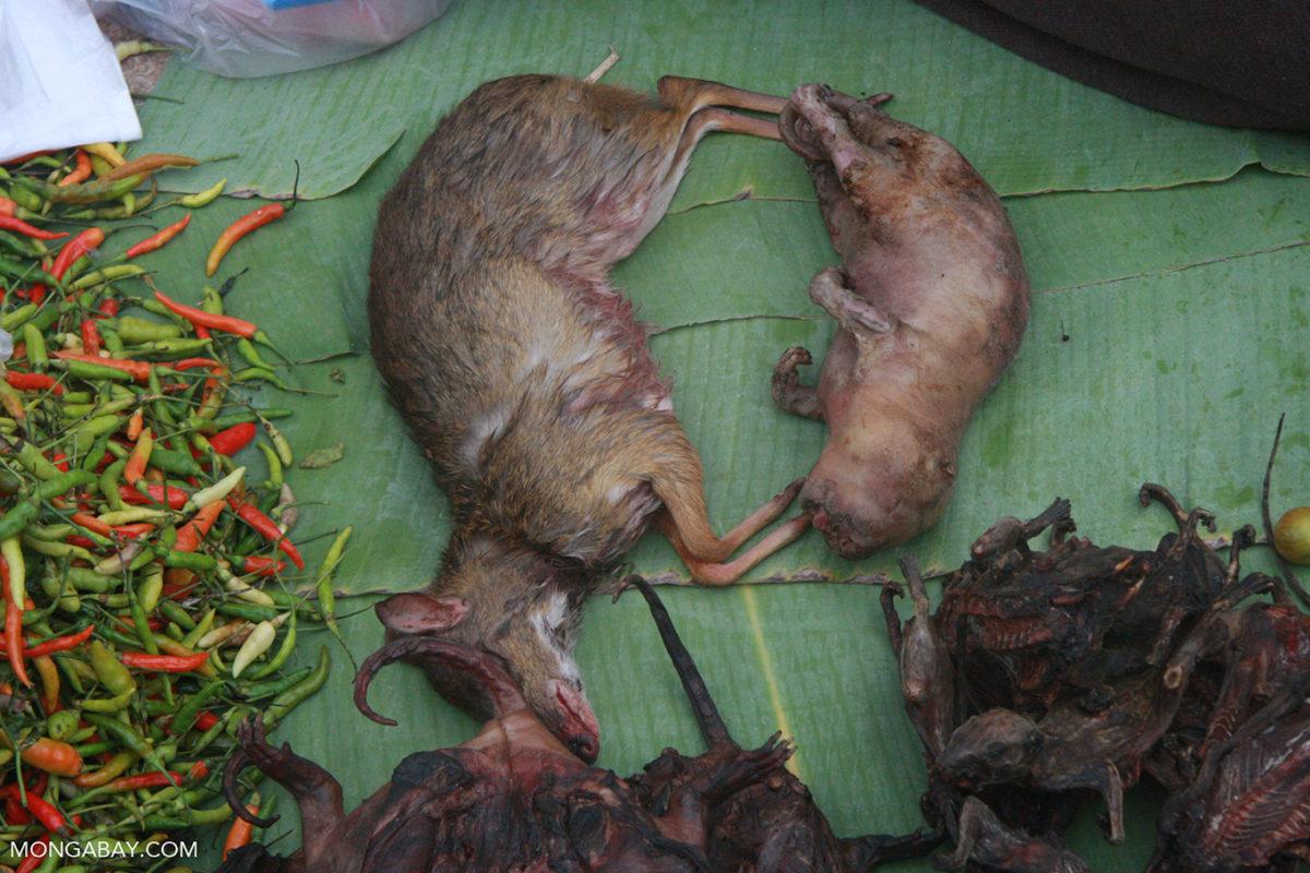 Wildlife in a market in Laos. Photo by Rhett A. Butler for Mongabay