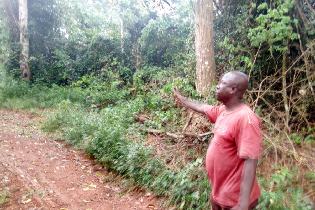 Local assembly representative Emmanuel Tabi wants Atewa designated as a national park. Image Awudu Salami for Mongabay.