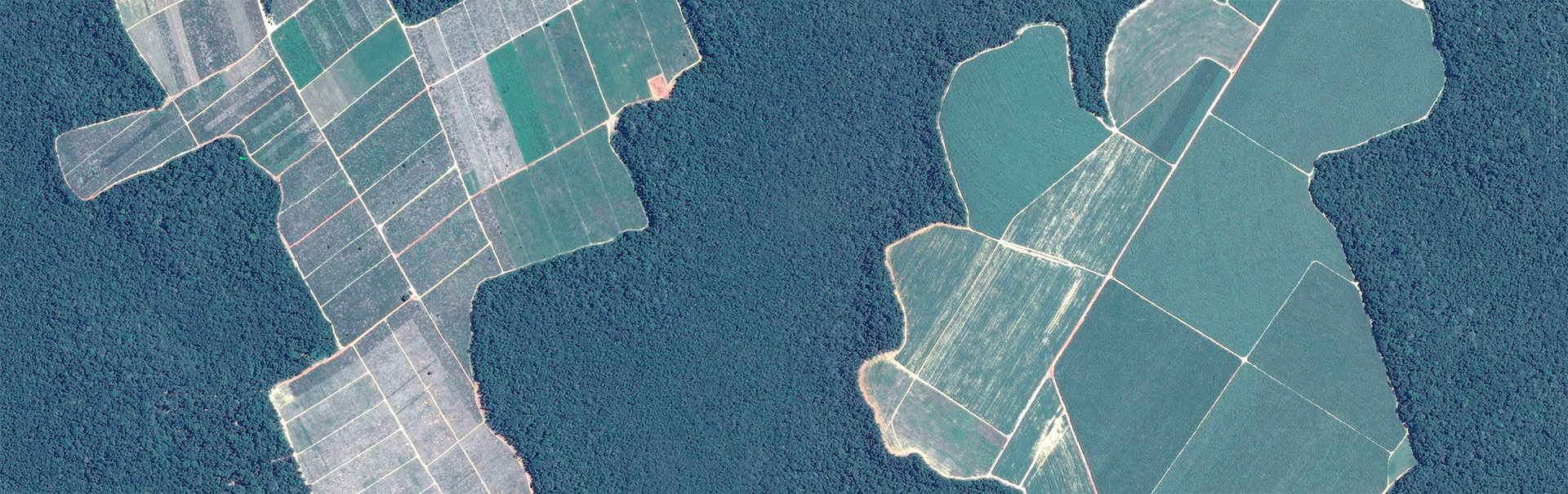 Google Earth image of deforestation for soy fields and cattle pasture north of the city of Manaus in the Brazilian Amazon in January 2020.
