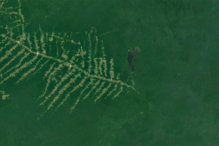 Google Earth image of fish-scale deforestation east of Caroebe, in the state of Roraima, Brazil in January 2020