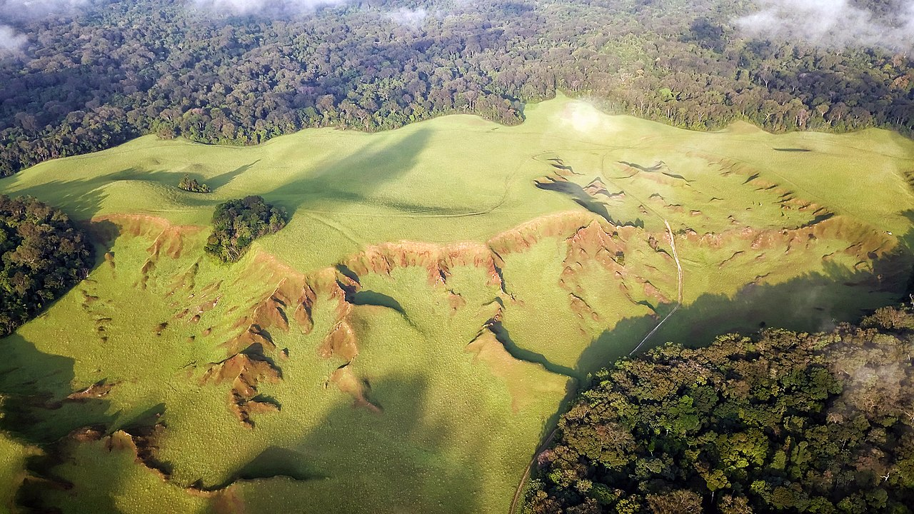 Nyonié savannaah, Gabon. Image by Christian Vigna via Wikicommons (CC BY-NC-4.0)