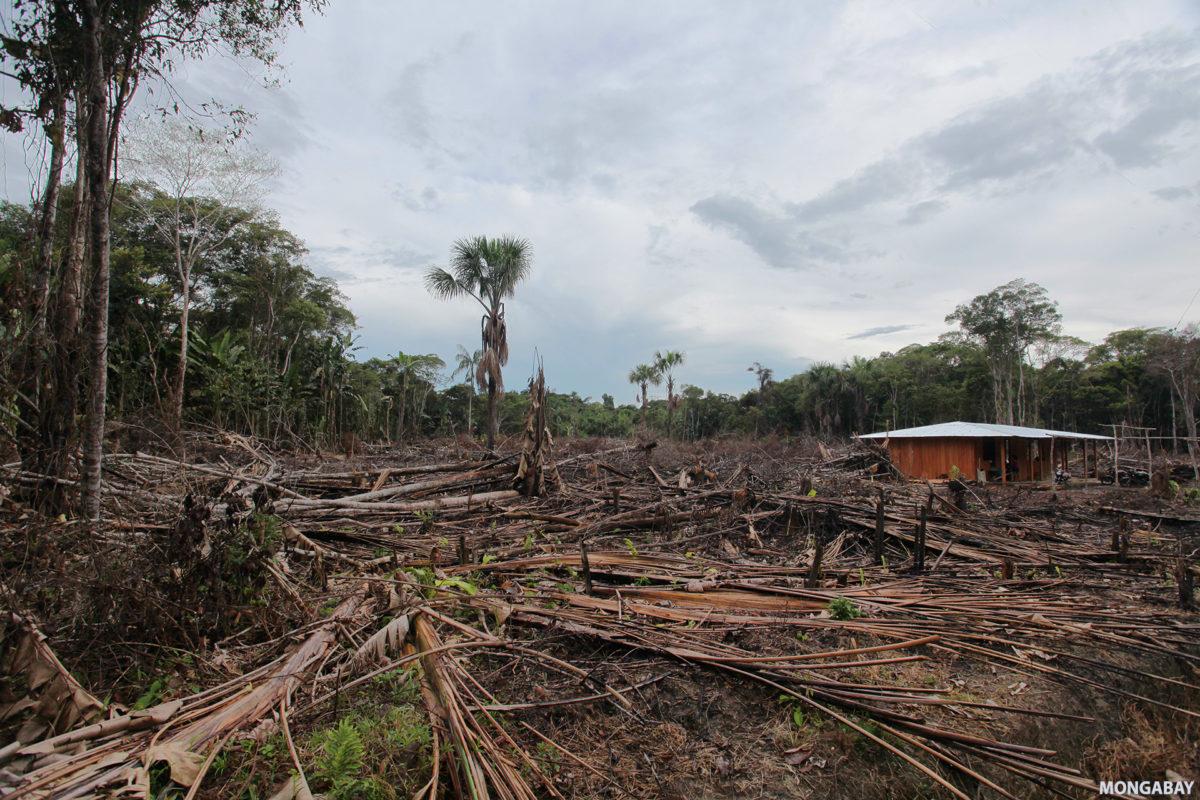 Deforestation in the Colombian Amazon. Photo by Rhett A. Butler for Mongabay.