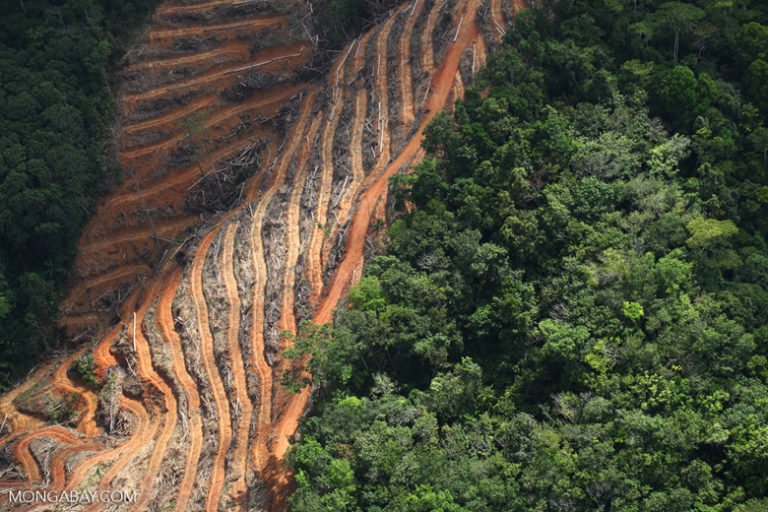 Deforestation for oil palm in Sabah, Malaysia. Beginning in 2020, large oil palm producers are required to obtain sustainability certification. Image by Rhett A. Butler/Mongabay.