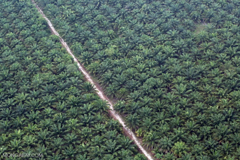 An oil palm plantation in Indonesia. Image by Rhett A. Butler/Mongabay.