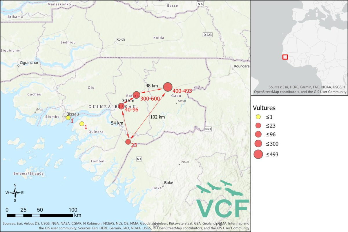 Map of February deaths of vultures in Guinea Bissau courtesy Vulture Conservation Foundation.