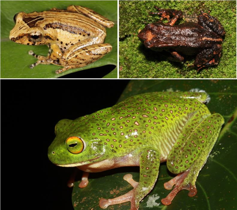 1 Back from the dead these 3 amphibians thought to be extinct were rediscovered from peak wilderness